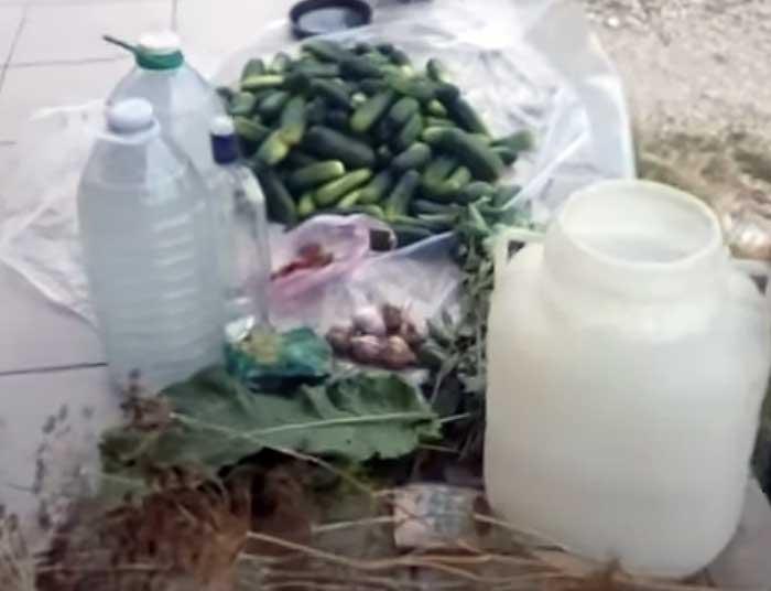 Засолка огурцов в бочке пластиковой